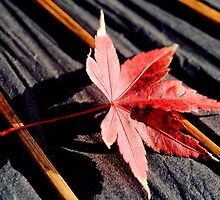 japanese maple leaf on parasol by Janine Paris