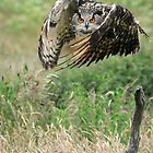 Eagle Owl by barnowlcentre