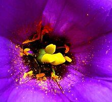 purple by Colorart