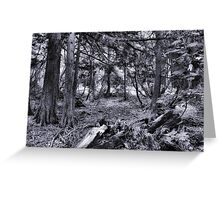 Avalanche Creek Trail Greeting Card