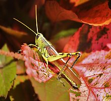 Beautiful Grass Hopper by Paulette1021
