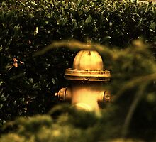 Yellow Fire Hydrant by Jonice