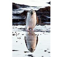 Downcast Penguin - New Zealand Photographic Print