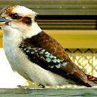 Kookaburra by Untamedart