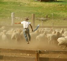 Nevada Shepherd jumping by Catherine Ames