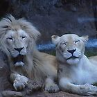Nice couple (animal life) by ANDREW BARKE