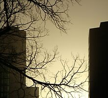 Winter cityscape in the late afternoon with tree - Melbourne by PenguinVic
