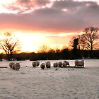 Winter Sheeps by JEZ22