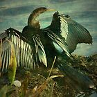 Anhinga spreading his wings, Everglades Florida by Marie Luise  Strohmenger