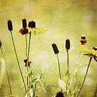 Summer Happiness by Jonicool