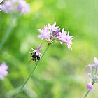 Summer Bee by Jonicool