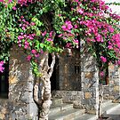 Blooming Bougainvillea by Teresa Zieba