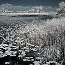 Infrared Marsh by brupert
