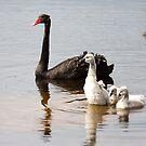 Mum & babies. by trevorb