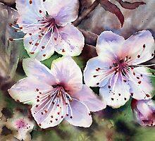 Meg's Blossom by Ann Mortimer
