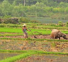 chinese farmer ploughing his field with one arm by Catherine Ames
