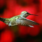 Hummingbird In Flight by jerryfrencho