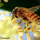 Busy Pollen Laden Bee by jerryfrencho