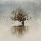 reflection by Daphne Kotsiani