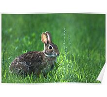 Bunny in the Grass Poster