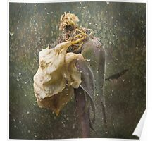 Rust 'n Roses ~ No 18 Poster