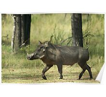 Trotting Warthog Poster