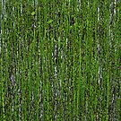 Green Green Grass by metronomad