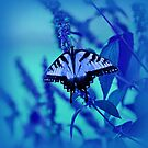 Butterfly in Blue by Sandy Keeton