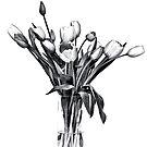 Tulip by Nikki Collier