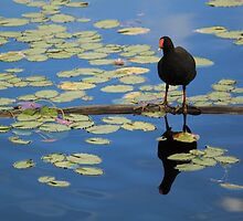 Mr Bird by kerenmc