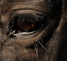 Ruffy's eye by Vicki Robinson