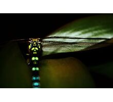 the unexpected visitor Photographic Print