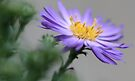 ---Ballad - Fall Aster by T.J. Martin