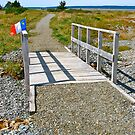 Belliveau Cove Board Walk by David Davies
