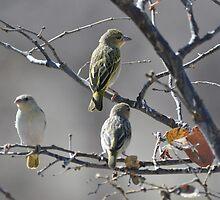 Namibian Bird by Denise Ray