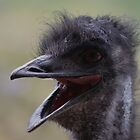  Ostrich   .Smile............!! by jeanlphotos