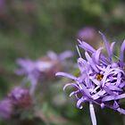 purple flower at Lake Michigan by nielsenca13