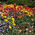 Yearning for Tulips by Patty (Boyte) Van Hoff