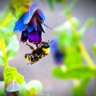 Bumbling Bee by James Zickmantel