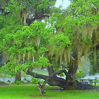 One Of City Parks Oak Trees  ( A Rainy Day) by Wanda Raines