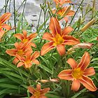 Tiger lillies at Fern Lake by Peggy Burch