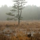Silent tree in misty land by steppeland