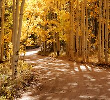 Aspen Path  by Teresa Smith