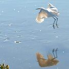 Egret taking off by ♥⊱ B. Randi Bailey