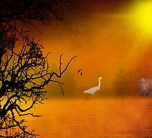 Misty Morning by imagetj