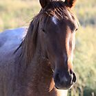 Portrait of a Wild Mustang by Kate Purdy