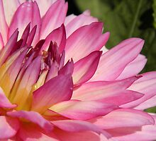dahlia, i love ya! by Linda  Makiej