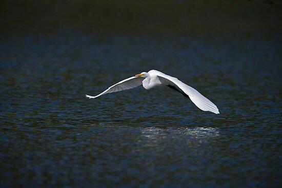Egret in Flight by Daniel  Parent