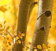 Intimate Aspen Portrait by Teresa Smith