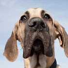 Great Dane Puppy by ManwithaCamera